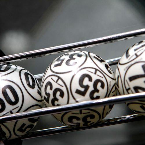 bingo-bingu-3